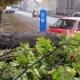 Počela sanacija drvoreda u Rimskoj ulici