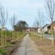 Novi drvored u Teslinoj